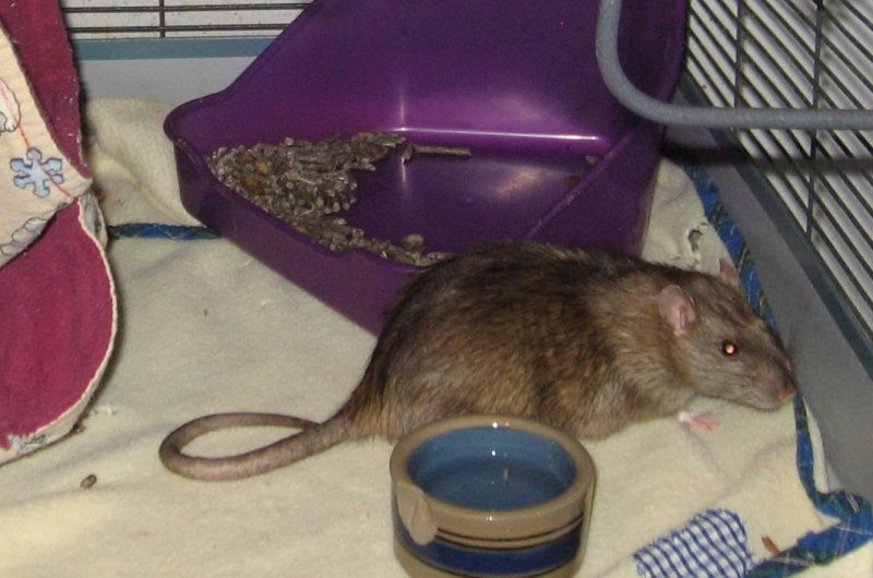 April 04 2019 two year old Neil in his messy cage.jpg