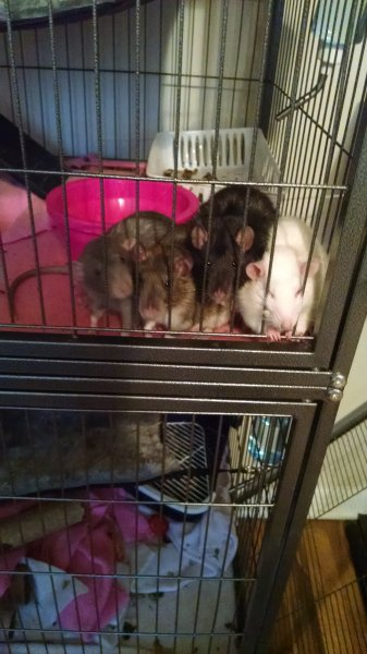 Feb 2018 The original 4 Ana, Pepper, Boof, and Bree.jpg