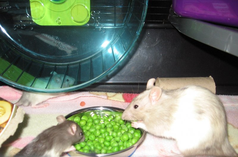 January 07 2019 mama Marbella and baby like peas.jpg