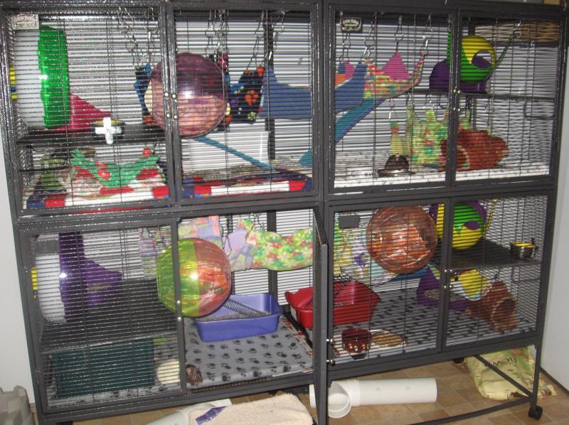 My cage 2015.jpg