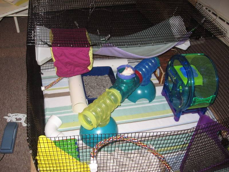 playpen 2008 with  Extreme Critter Revolution .jpg