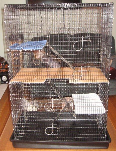 Sept 2017 Hannahs cage.jpg