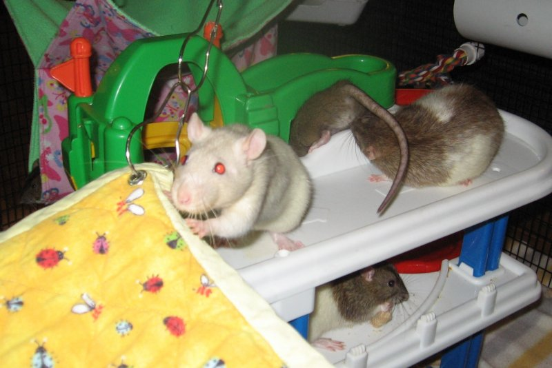 September 08 2018 Osirus & others in the playpen.jpg