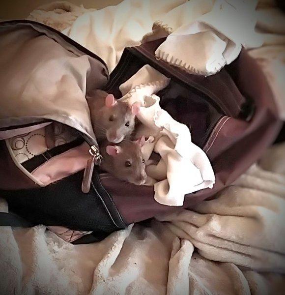 Sisters in their backpack.jpg